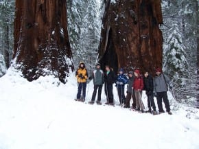 Giant Sequoia Group Snowshoe