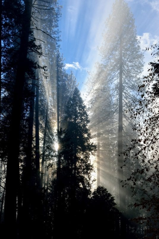 Yosemite Forest Rays of Sunshine (Dave M.)